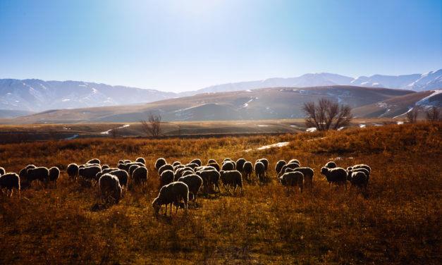 ČEŠI KULTIVUJÍ ZEMĚDĚLSTVÍ KAZACHSTÁNU