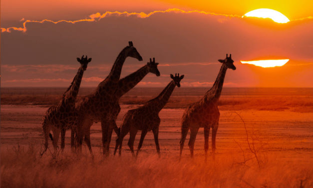 Teritoriální kulatý stůl – Severní a Subsaharská Afrika