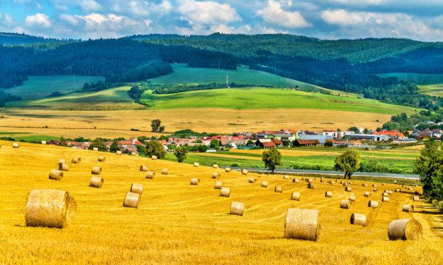 SLOVENSKO JE ZÁVISLÉ NA DOVOZU MASA I MRAŽENÉ ZELENINY