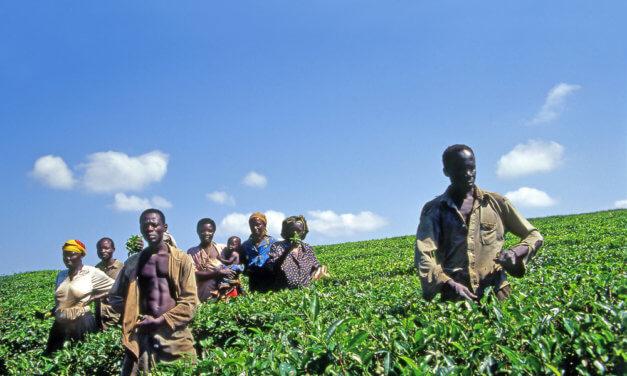 UGANDSKÉ ZEMĚDĚLSTVÍ MÁ NEJVĚTŠÍ POTENCIÁL RŮSTU V AFRICE
