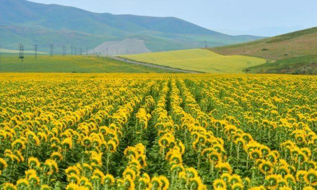 CESTA PRO AGRO-PRŮMYSLOVÉ FIRMY DO KAZACHSTÁNU VEDE PŘES REGIONY